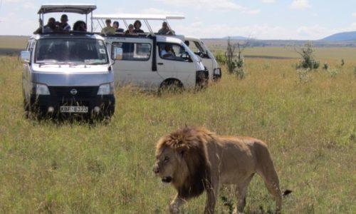 7 Days Masai Mara Lake Nakuru Lake Naivasha and Amboseli Best Experience Safari in Kenya