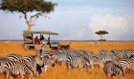 3days 2Nights Masai Mara joining safari