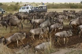 4Days MaasaiMara LakeNakuru BudgetSafari
