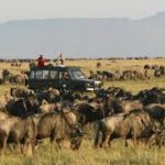 Wildlife safari Africa Tour