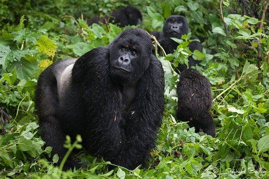 Uganda-Rwanda Tour