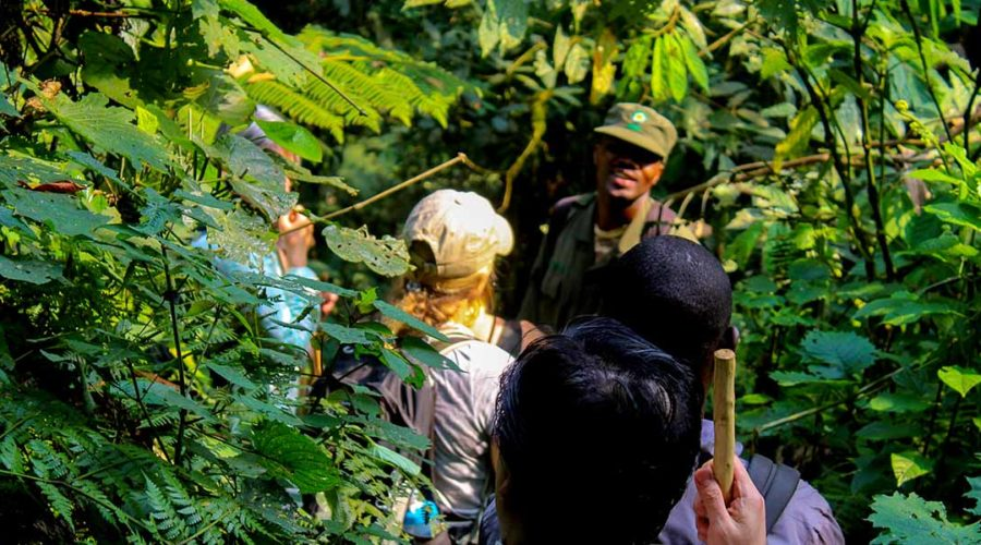 tailored gorilla safaris in Uganda and Rwanda with Gorilla Trek Africa. We offer gorilla safari packages to Bwindi, Mgahinga and Volcanoes national parks