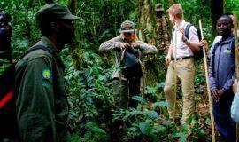 tailored gorilla safaris in Uganda and Rwanda