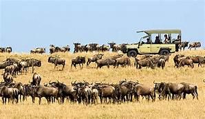 Amboseli National Reserve TOUR