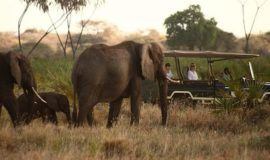 amboseli 3 days safari