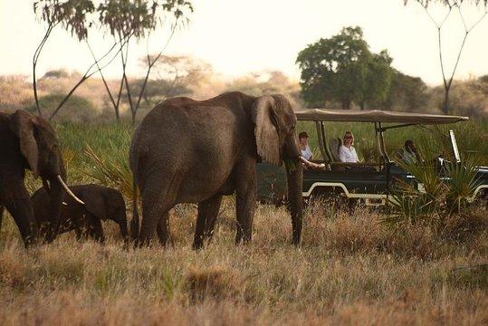 amboseli 3 days safari