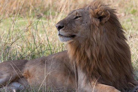 7-Day Masai Mara Safari