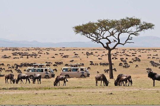 Days Masai Mara tours