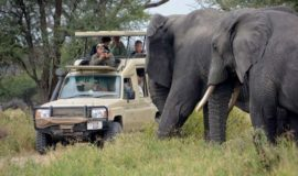 Best Of Kenya and Tanzania Safari