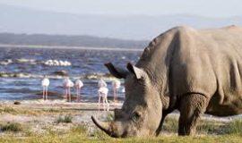 Lake Naivasha and Elementaita 2020 Deals