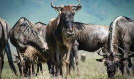 3Days Masai Maratours