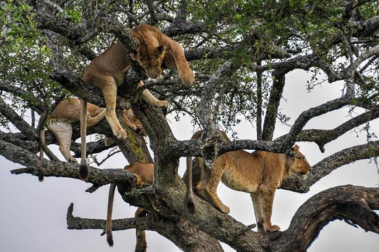 kenya-and-tanzania Safari