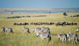 masai mara 7 days