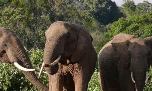 8 Days 7 Nights Classic Kenya Safari Safaris / 8 days / Amboseli National Park, Aberdare National Park and Lake Nakuru National Park