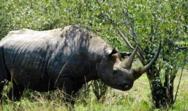 2 Nights 3 Days Masai Mara Joining Safari