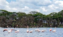 1 DAY LAKE NAIVASHA AND HELLS GATE NATIONAL PARK WALKING WITH THE ANIMALS