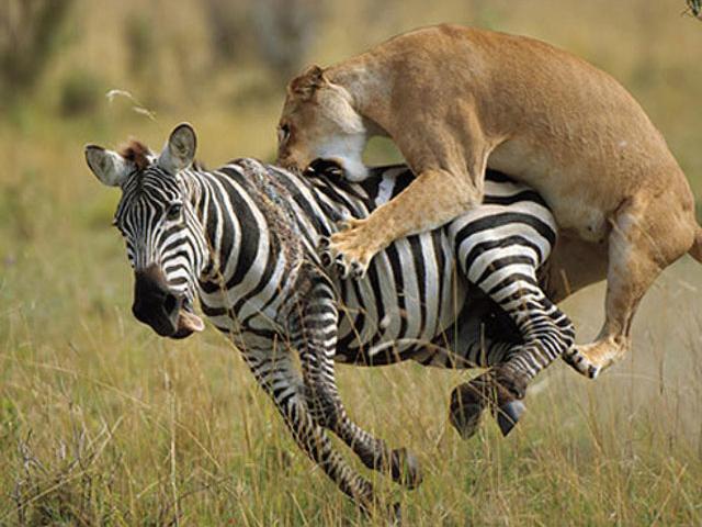 3 days Masai Mara Game Reserve
