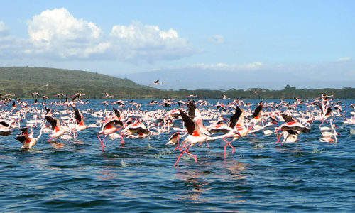 1 DAY LAKE NAIVASHA AND HELLS GATE NATIONAL PARK WALKING WITH THE ANIMALS