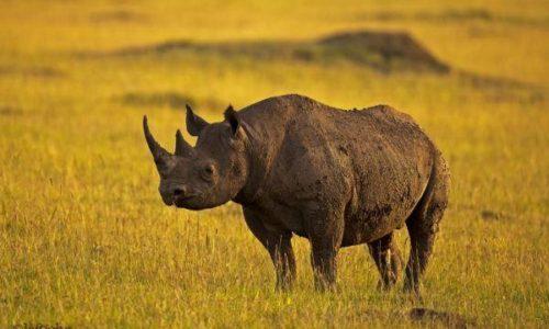 Best African Safari Package
