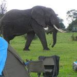 Ngorongoro simba campsite Tanzania