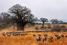6 Day Manyara Tarangire Serengeti Ngorongoro Lodge