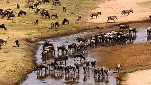 Best of Tanzania; North & South safaris