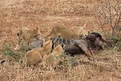 Best of Tanzania North & South safaris