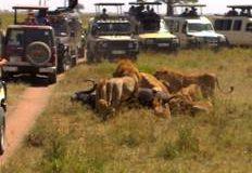 Budget Joining Group Tanzania safaris 2020