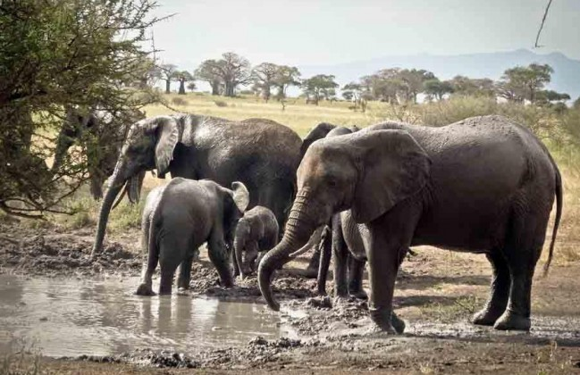 100 Best Safari Destinations in Africa