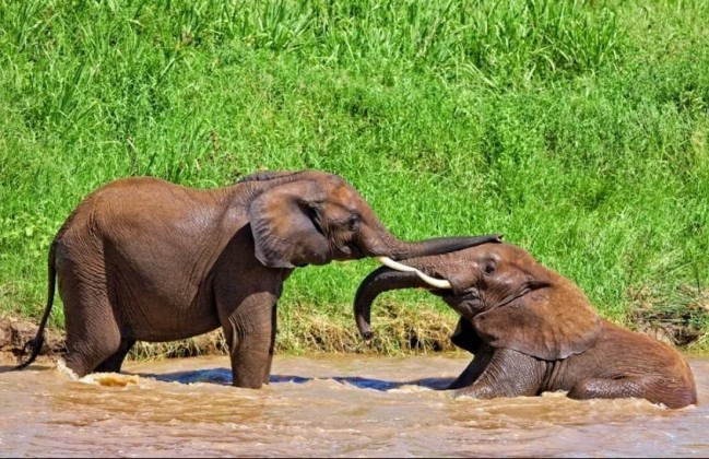 Kenya Safari Holiday