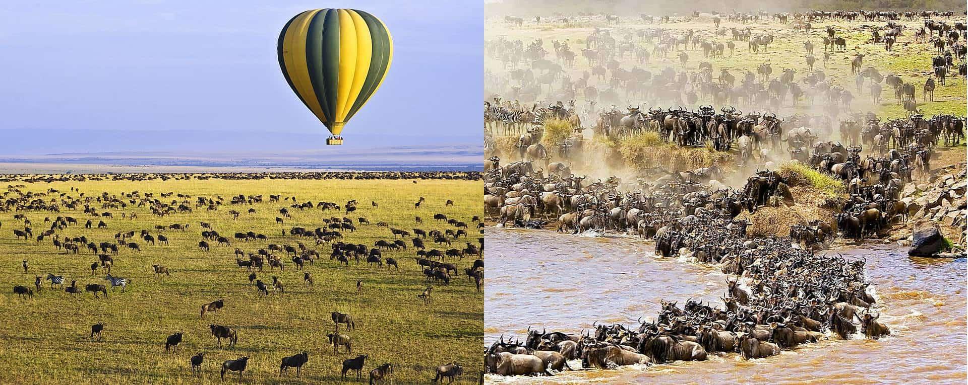 5days Masai Mara lake Nakuru and lake Naivasha safari