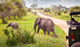 3 days masai mara safari offers