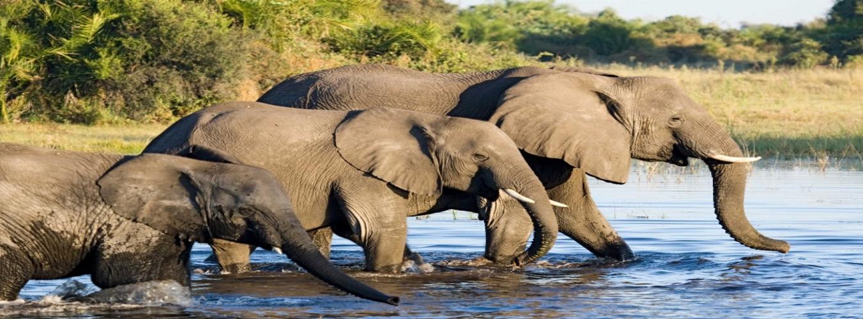Kenya Safaris Amboseli