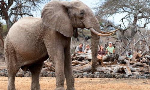 Kenya safaris 10 Day Air Safari