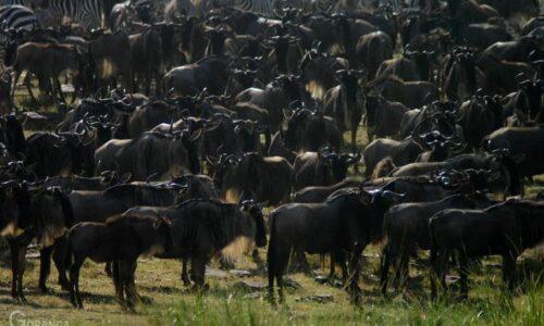 Budget Masai Mara safari 2020-2021
